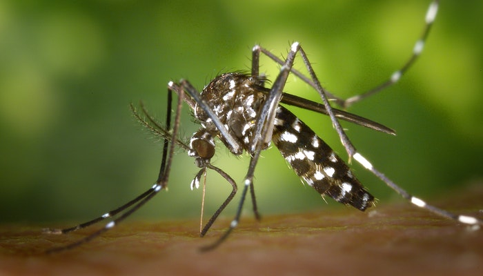 Malaria in Nigeria; How to protect your family